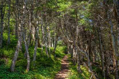 spurwink island hike east coast traiil