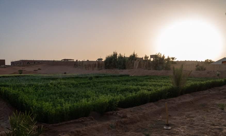 Desert farm