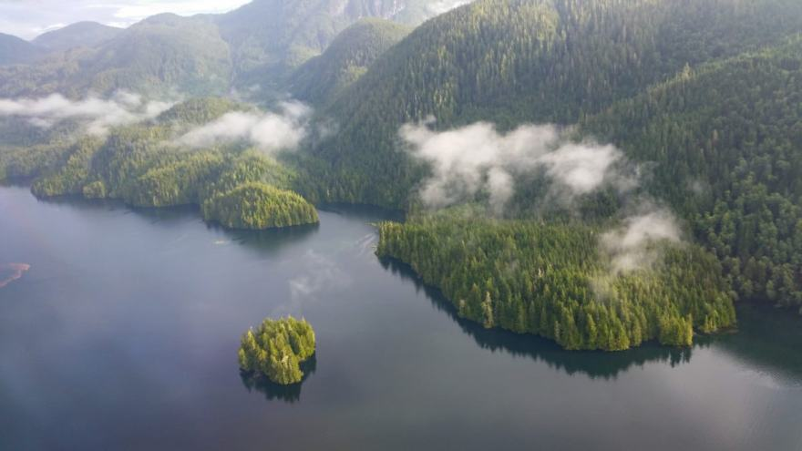 great bear rainforest from above