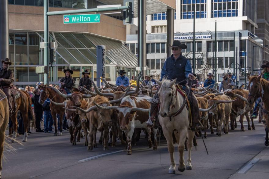 Denver things to do stock show parade