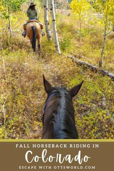 riding horses through autumn tree forest