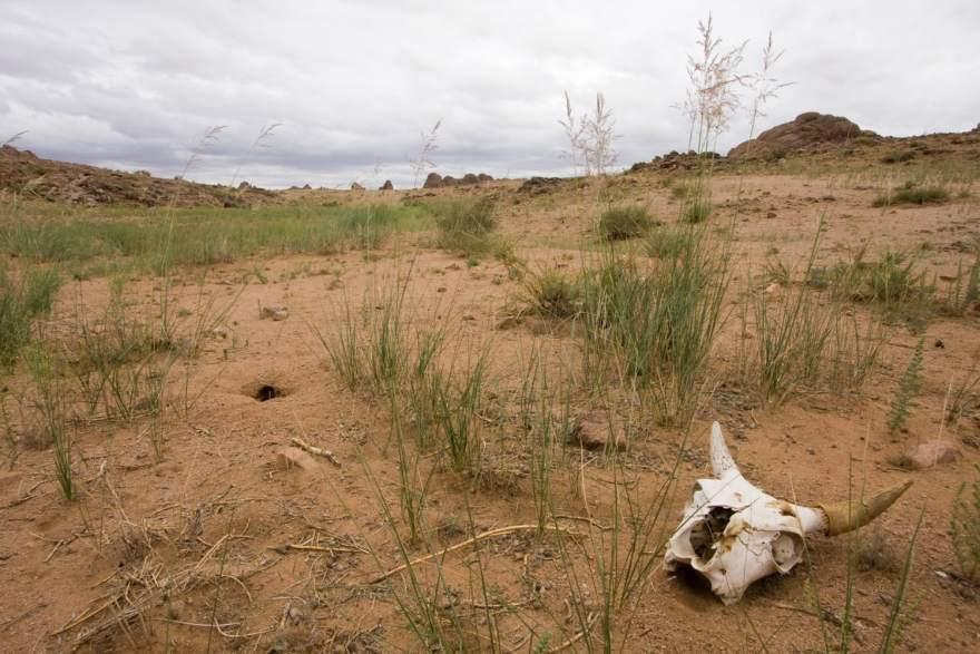 skull mongolia