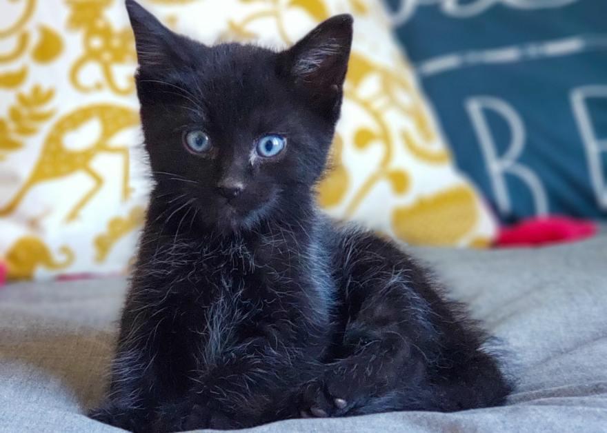 foster kitten 2 lbs