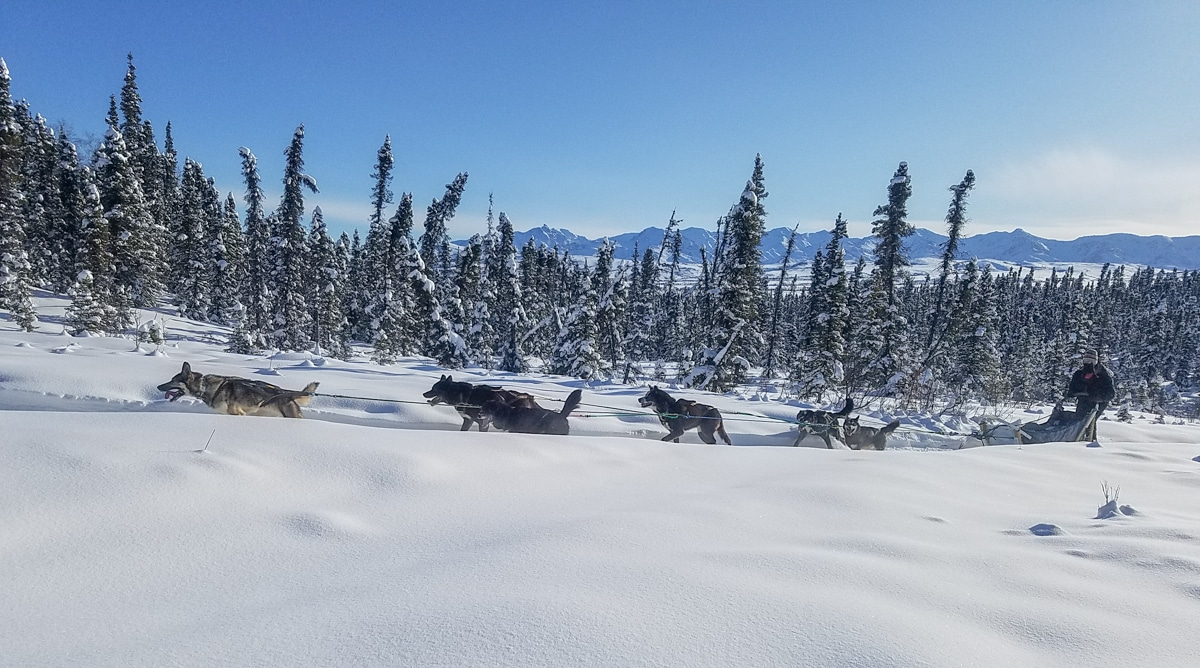 Alaska Sled Dogs and the Ultimate Denali Dogsled Expedition