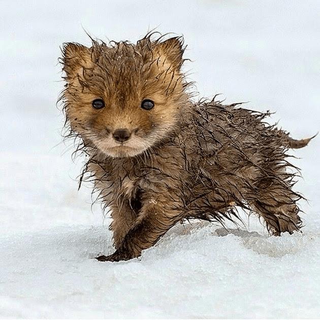 en-tatli-sevimli-hayvan-resimleri-fotograflari-1