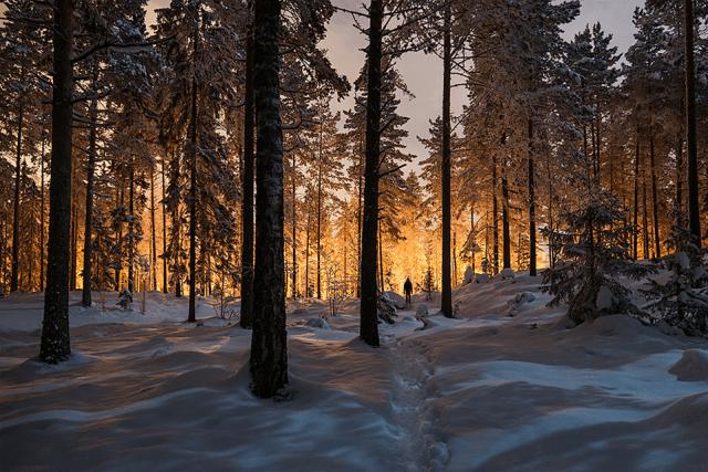 Fotoğraf: Mikko Lagerstedt