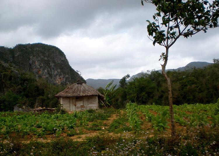 La vallée de Vinales