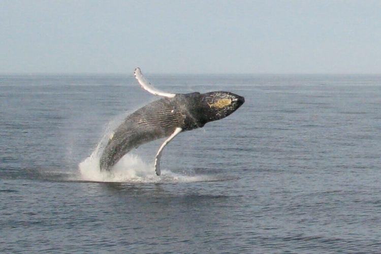 observation-baleine