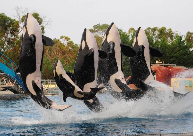 Je sais pas vous, mais ce n'est pas de cette manière que j'ai envie d'observer les orques...