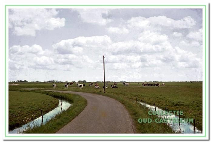 De Uitgeesterweg met koeien in het weiland.