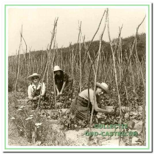 Een tuinploegje aan het werk rond 1960. De strohoeden beschermen tegen de zon en de bijverschijnselen van medicijnen.