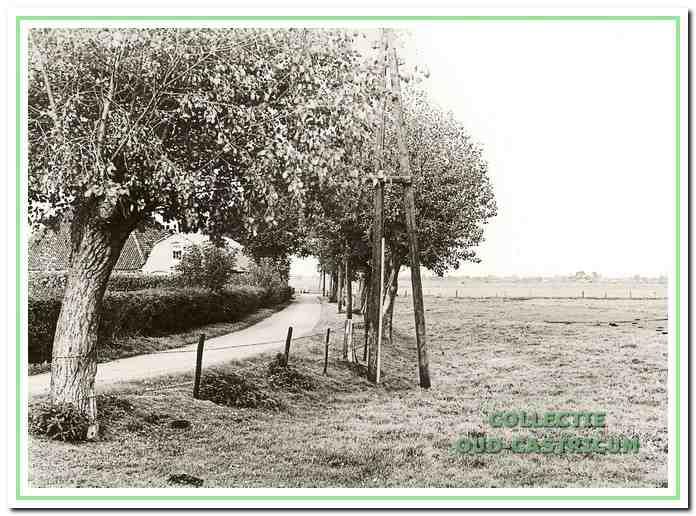 De Achterlaan met hier nog geen bebouwing aan de zuidzijde. Tussen de bomen in nog juist zichtbaar de boerderij van Willem de Ruijter (zie 41).