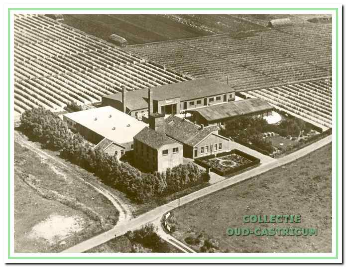 Het bedrijf van 'Rijnveld' aan de Duinweg, eerder was hier een fijn-lederfabriek en een groentedrogerij gevestigd. De bollenschuur met 'toren' linksvoor is hier nog een overblijfsel van (zie 5).