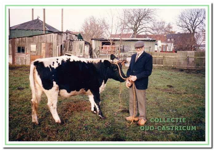 Jaap Kuijs met zijn laatste koe in 1986. Op de achtergrond de hooiberg, die voor het onderbrengen van kleinvee volledig is afgetimmerd.