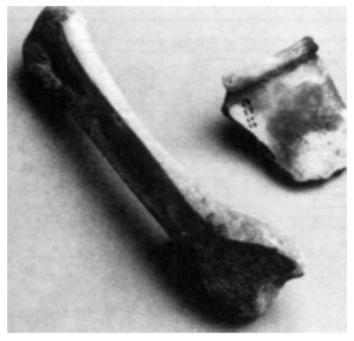 Kogelpotscherf met een patroontje van een dubbel rijtje kantjes. Bewerkt en afgesloten glijbeen.