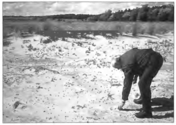PWN-boswachter Kees Zonneveld raapt een prehistorische scherf op uit het zand van de 'Wei van Brasser'. In 1998 werd op dit terrein een groot aantal scherven gevonden, die erop kunnen duiden dat diep onder het zand een nederzetting verborgen ligt. De oudste scherven die hier werden gevonden, stammen uit de Vroege IJzertijd (ca. 700 voor Christus) en zijn de oudste die ooit op Castricums grondgebied zijn gevonden. Het is mogelijk dat een deel van de gevonden scherven verband houdt met het buurtschap 'Arem', waarvan we weten dat het ten noordwesten van Bakkum heeft gelegen en in de Vroege middeleeuwen is overstoven door duinzand.