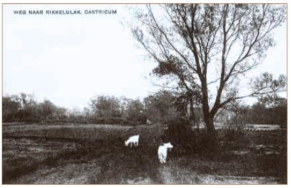 Het Prikkelvlak was een nog niet afgegraven strook langs de Geversweg.