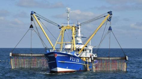 À l'heure actuelle, au sud de la mer du Nord, 84 navires néerlandais pratiquent la pêche électrique.