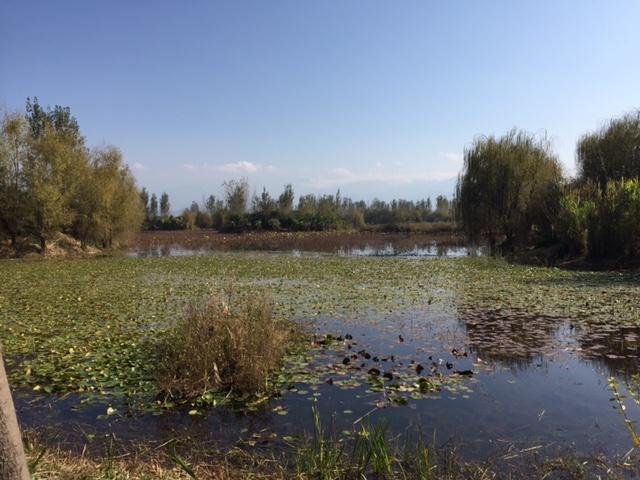 Qionghai wetlands