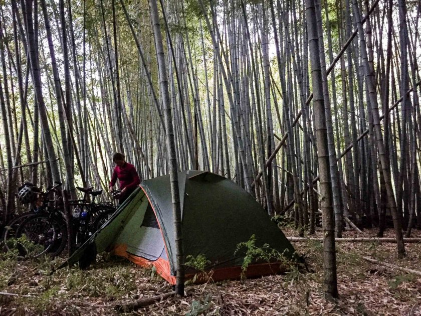 Bamboo forest camping