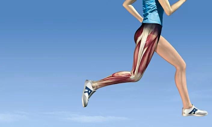 muscles, running