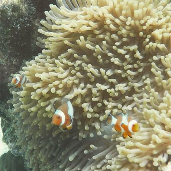 Snorkelling Koh Rok Island