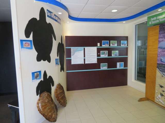 Cayman Turtle Centre