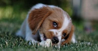Adorable pet dog eating