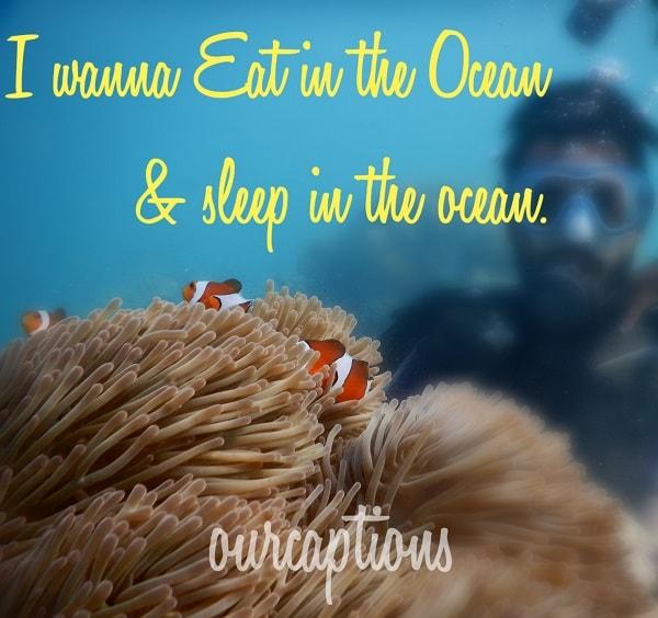 Eat in the ocean sleep in the ocean