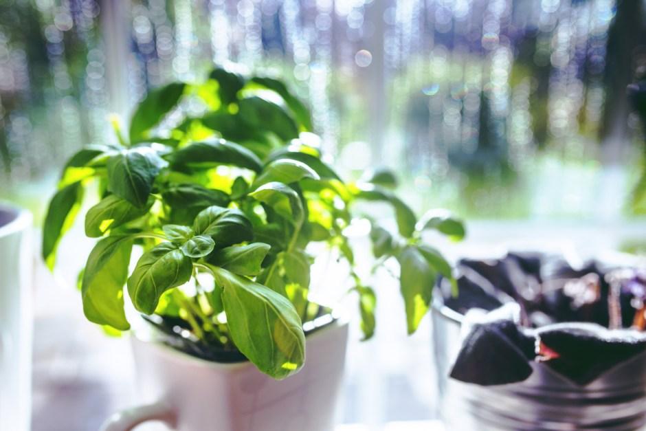 Gardening 101: Getting Started