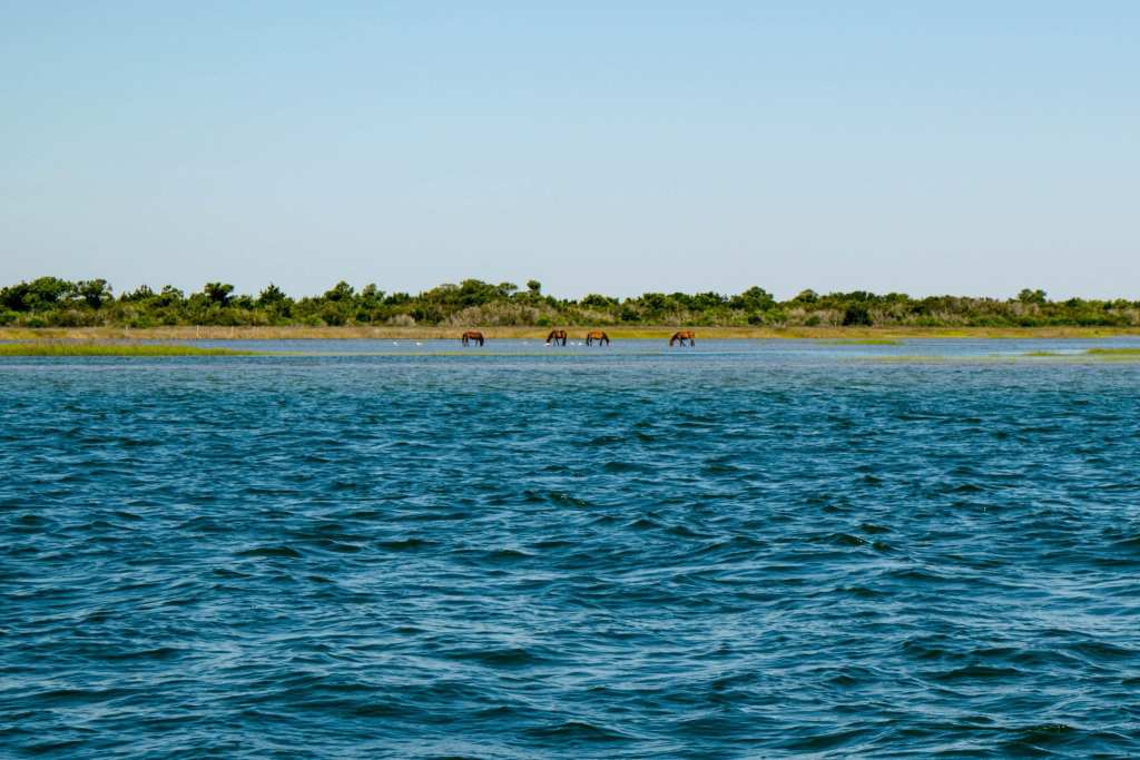 Things to Do in Beaufort NC: visit horses on Shackleford Banks