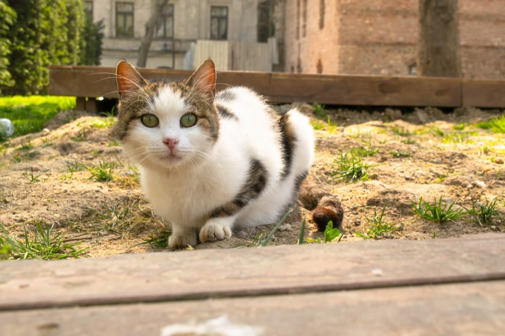 2 Day Istanbul Itinerary: Cat