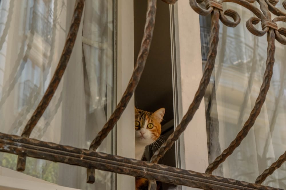 2 Day Istanbul Itinerary: Cat in Window
