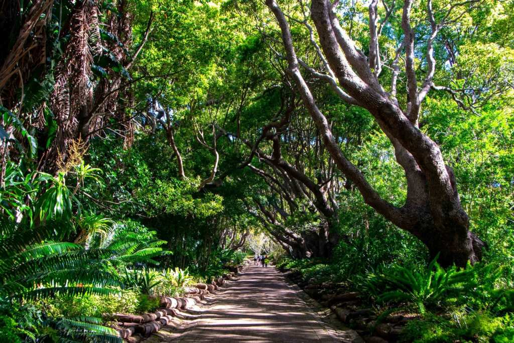South Africa Packing List: Tunnel of Trees Kirstenbosch Gardens