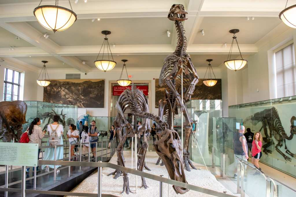 4 Days in New York City: American Natural History Museum Dinosaurs