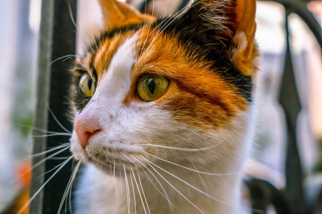 Fun Things to Do in Dubrovnik Croatia: Close-up portrait of cat in Croatia