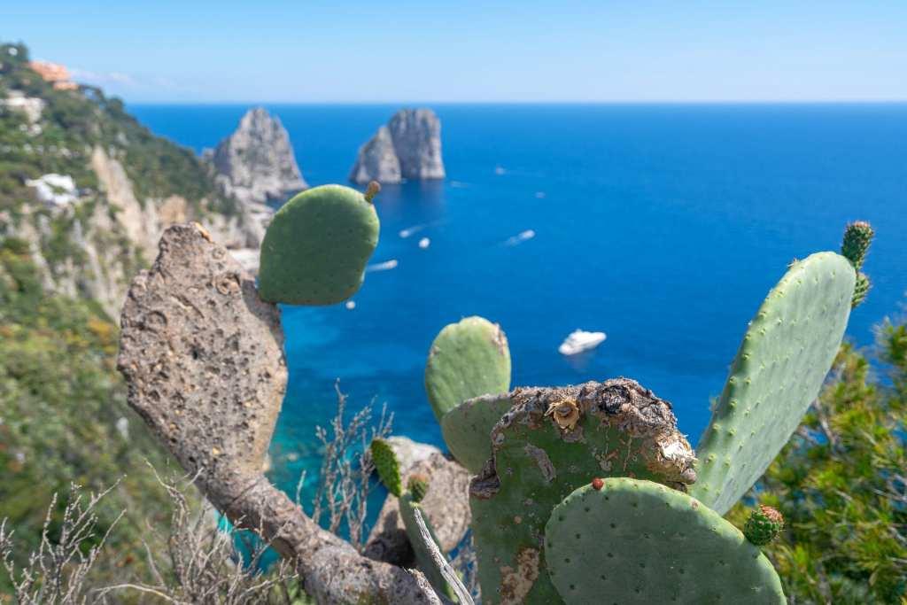 Faraglioni with cacti in the foreground on Capri