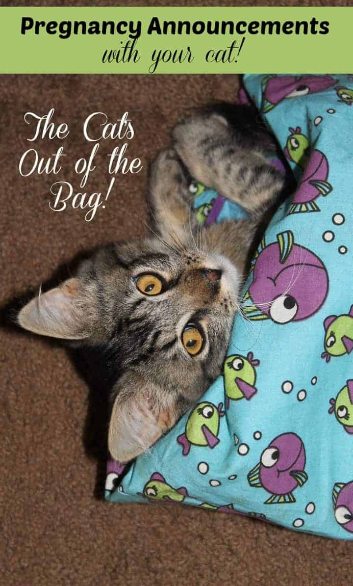 7 Pregnancy Announcements That Include Your Cat