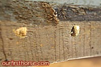 Carpenter Bee Holes