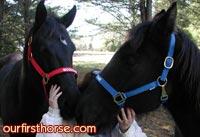 Horses-in-halters.jpg