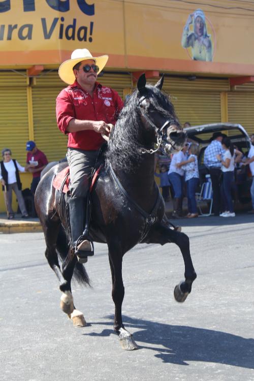 Horse Parade (1)
