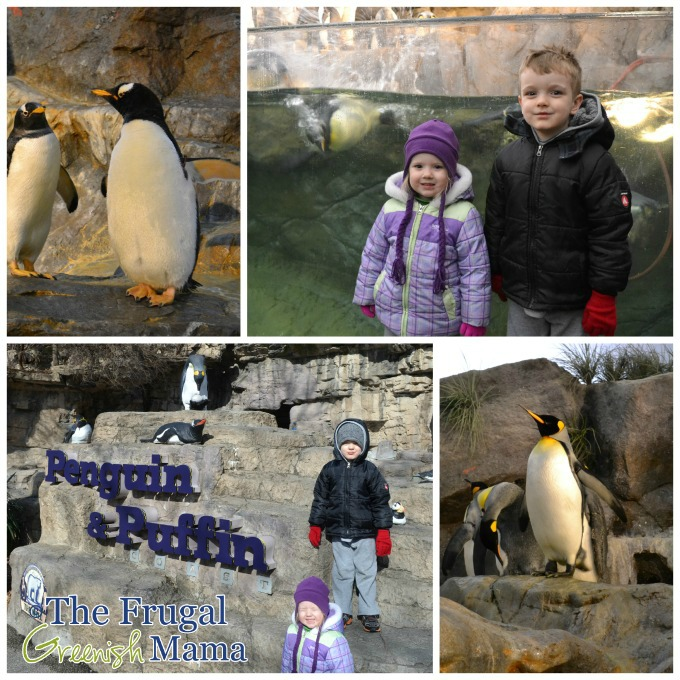 zoo penguins collage