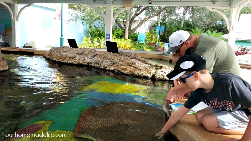 Touching the Stingray at Sea World in Stingray Lagoon