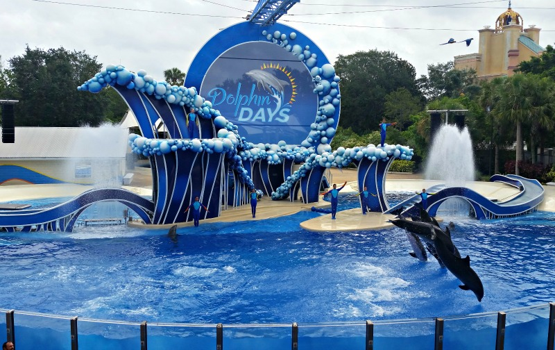 Beautifully cheorgraphed Dolphin Show at Sea World Orlando