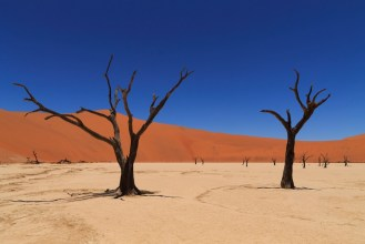 Dead vlei at Namib Naukluft National Park