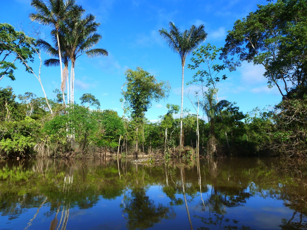 Living in the Peruvian Jungle is a wonderful experience. Image Credits: Global Water Forum on Flickr