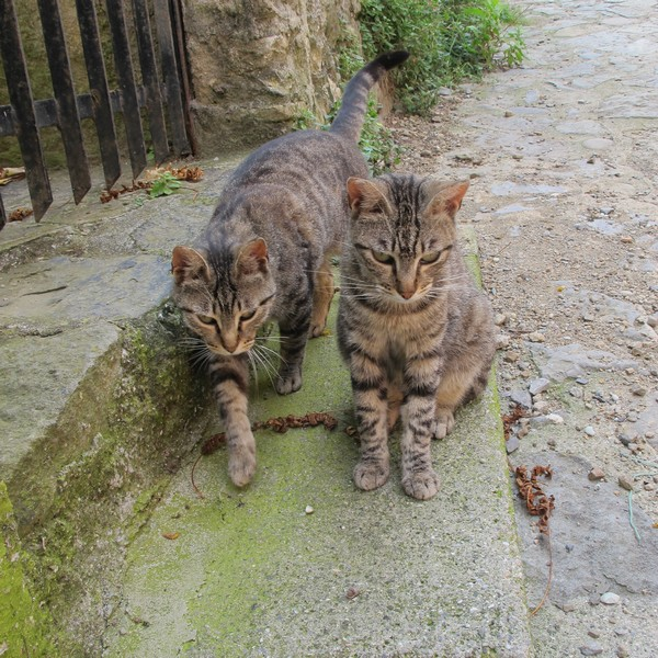 Cats of Italy - Monterosso