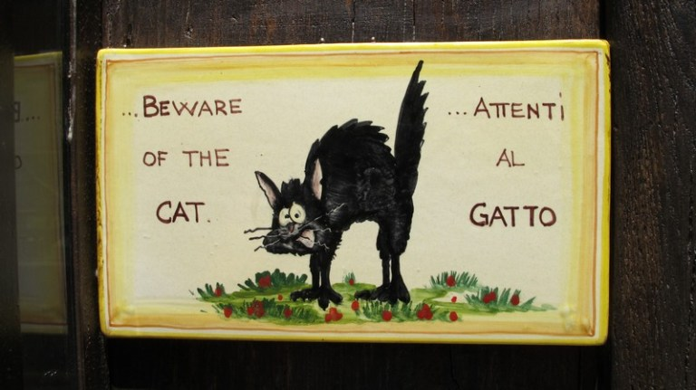 Beware of Italian Cats