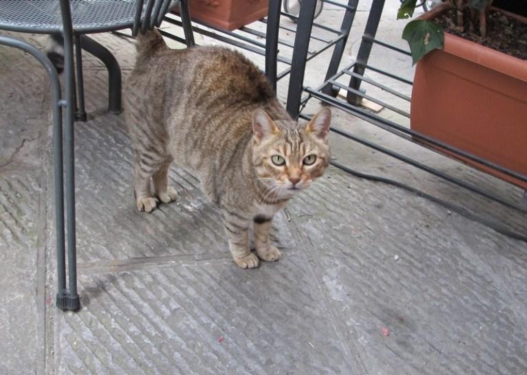 Cats of Italy - Montepulciano