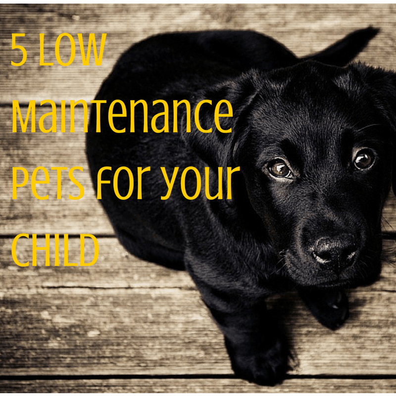 5 Low Maintenance Pets for Your Kids